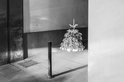 black & white, noir & blanc, photography, xmas tree, Christmas tree